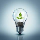 Idea ecológica Imagen de archivo libre de regalías