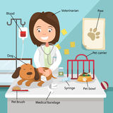 The idea of female veterinarian curing the Dog Stock Photo