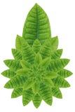 Idea form leaf. Stock Image