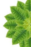 Idea form leaf. Stock Photo