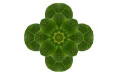 Idea form leaf. Stock Photos