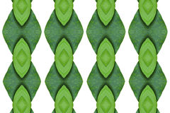 Idea form leaf. Royalty Free Stock Image