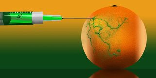 The idea of genetically and chemically engineered food and plants is illustrated with syringes injecting and changing the color of. Citrus fruit. This is an royalty free illustration