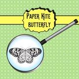 Idea Leuconoe de la mariposa Cometa de papel Bosquejo de Imagen de archivo libre de regalías