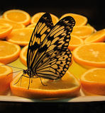 Idea Levkonoya de la mariposa en naranja Fotos de archivo