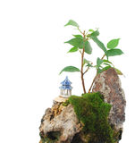 Idea of making a rock bonsai. Closeup A rocking bonsai is at isolated white background Royalty Free Stock Photography