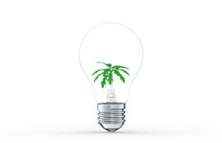 Idea to Growth Royalty Free Stock Photo
