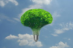 Idea Tree Lighting. The idea is to come out with something that is natural and shows that both are compatible Royalty Free Stock Photos
