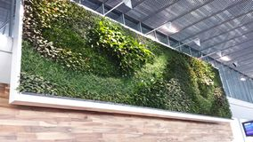 Wall garden Charles de Gaulle airport royalty free stock image