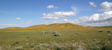 Ideal Spring Landscape. Sunny, blue-sky day in the hills near the Caiifornia Poppy Reserve Royalty Free Stock Photos