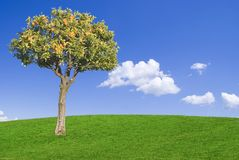 Ideal world. Orange tree in a in a green meadow against a blue sky Stock Photos
