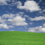 Idealer Himmel und Gras auf einem Hügel Lizenzfreies Stockfoto