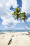 Idealic加勒比海岸线 免版税库存图片