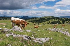 Idealistic landscape, Alpine pastures in Europe. royalty free stock image