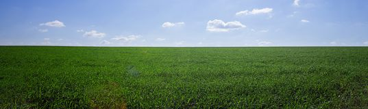 Idealistic summer landscape. With grass royalty free stock images