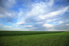 Idealistic summer landscape Royalty Free Stock Images