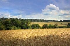 Idealistic summer landscape Stock Images