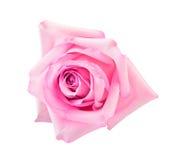 idealnie różową różę Fotografia Royalty Free