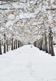 idealny dzień zimy Obrazy Royalty Free
