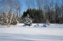 idealny dzień zimy Zdjęcia Royalty Free