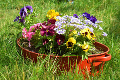 Ideas for garden, flowers in old wash-basin Stock Images