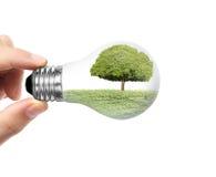 Light bulb on a hand Stock Image