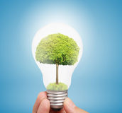 Ideas light bulb in hand Stock Image
