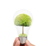 Ideas light bulb in hand Stock Photography