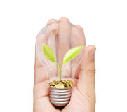 Ideas light bulb in  hand Royalty Free Stock Images