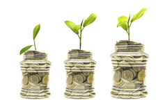 Ideas, silver coins in a piggy bank with trees growing. clipping path Stock Photos