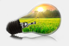 Ideas, sun rise with the light bulbs. Ideas, a field with sunrise in the morning in a light bulb Royalty Free Stock Images
