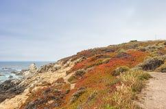Idee di viaggio Pendii di montagne di fioritura della linea costiera pacifica Immagini Stock