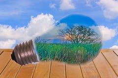Idee, una lampadina con un albero Fotografie Stock Libere da Diritti