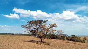 Ideia aérea da agricultura e da cena rural Paisagem de Beaufiful Grande opinião do campo vídeos de arquivo