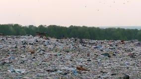 Ideia aérea da descarga de lixo enorme da cidade no por do sol Corridas do cão em torno das pilhas do lixo video estoque