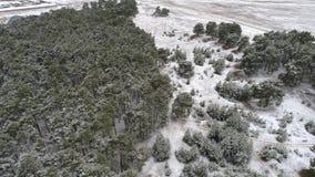 Ideia aérea da fotografia aérea do inverno da floresta do pinho do inverno vídeos de arquivo