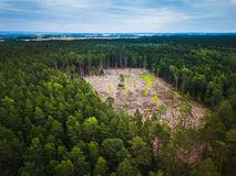 Ideia aérea da serração de madeira da floresta fotografia de stock