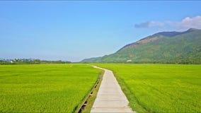 Ideia aérea de aumentação do campo do arroz com o longo caminho contra o céu vídeos de arquivo