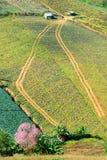 Ideia aérea de campos de exploração agrícola Imagem de Stock Royalty Free