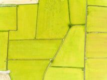 Ideia aérea de campos do arroz imagens de stock royalty free