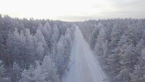 Ideia aérea de partes superiores da árvore da floresta coberto de neve vídeos de arquivo
