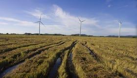 Ideia aérea de um campo colhido do arroz foto de stock