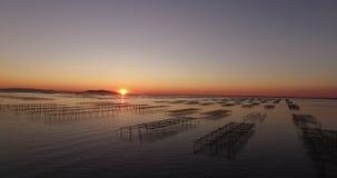 Ideia aérea de um campo da ostra durante o por do sol vídeos de arquivo