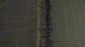 Ideia aérea de um campo de cima de na primavera foto de stock