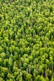 A ideia aérea de uma abundância de variedades de árvore e a outra vegetação florescem no taiga do verão Imagens de Stock