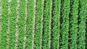 Ideia aérea do campo da plantação filme