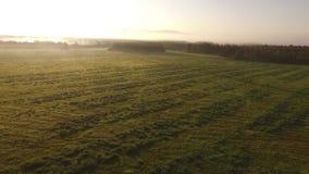 Ideia aérea do campo verde bonito com um inclinação de nivelar o céu no por do sol contra uma metragem da floresta Paisagem rural filme