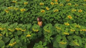 Ideia aérea do grande campo bonito do girassol e da posição encaracolado atrativa nova da menina entre fileiras das plantas video estoque
