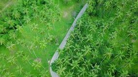Ideia aérea do transporte que move-se ao longo da estrada através da plantação da palmeira do coco vídeos de arquivo