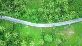 Ideia aérea do transporte que move-se ao longo da estrada através da plantação da palmeira do coco filme